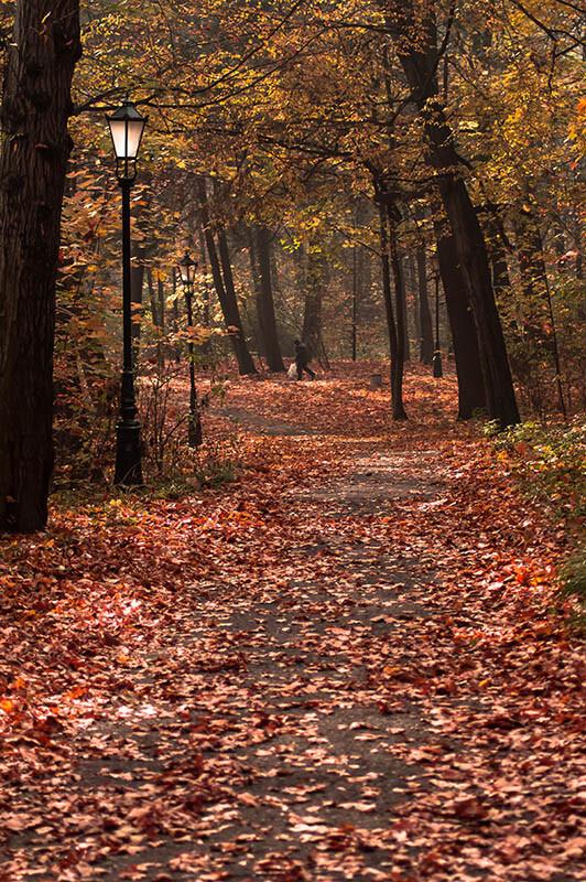 Latarnia jesienią w lesie